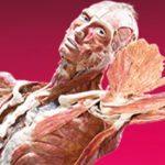 Top 10 Ways We've Preserved Human Bodies