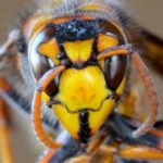 10 Horrifying True Stories Of Murderous Wasps And Bees