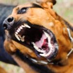 10 Horrifying Times Dogs Killed People