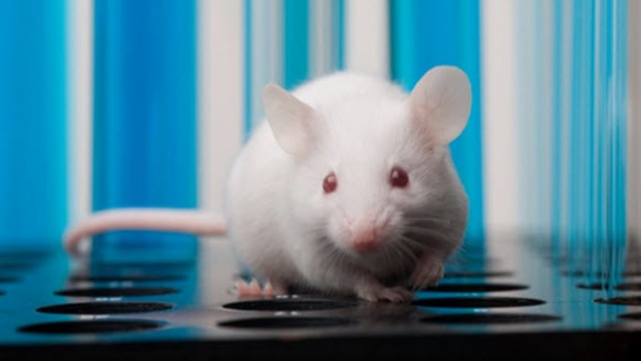 Animal Sec Movies 10 experiments that have created real human-animal hybrids