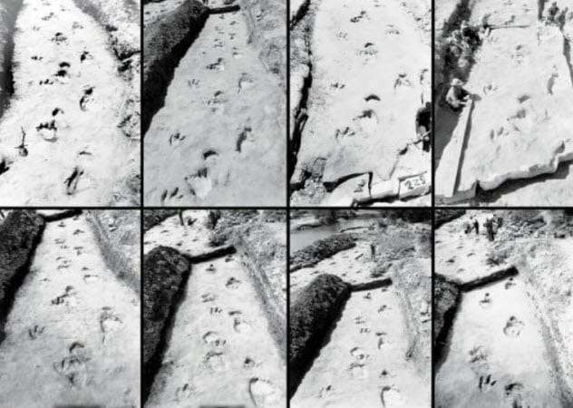 Top 10 Dinosaur Fossils Frozen In Time Listverse