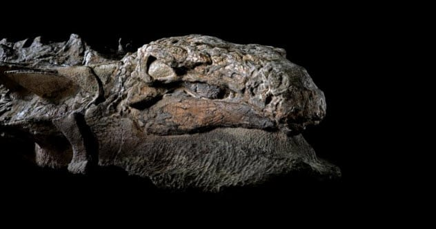 Top 10 Dinosaur Fossils Frozen In Time Listverse