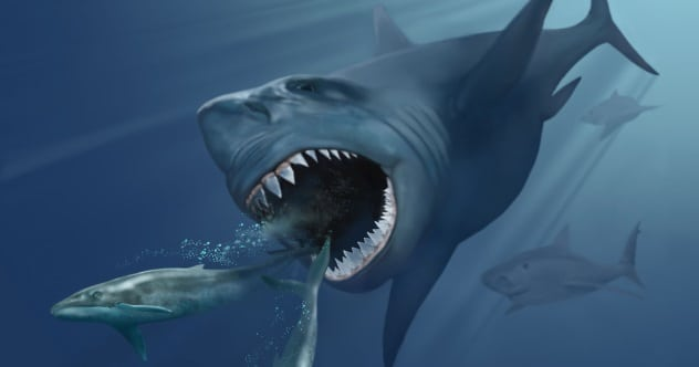 Photo of 10 Fascinating Facts About The Frightening Megalodon
