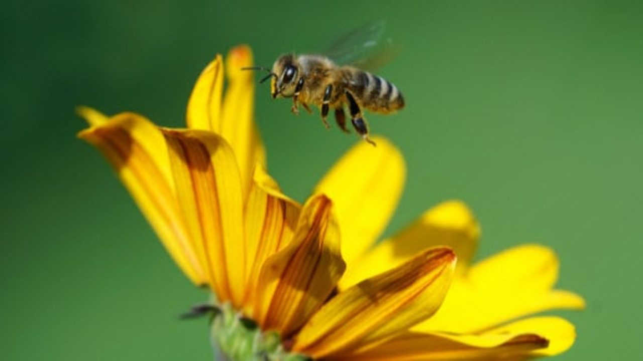 Top 10 Scientific And Historical Facts About Bees - Listverse