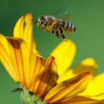 Top 10 Scientific And Historical Facts About Bees