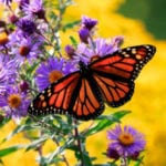 10 Incredibly Useful Things That Butterflies Do