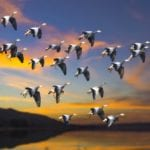 15 Strange Myths And Facts About Migratory Birds