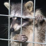 10 Unusual Stories Involving Drunk Animals