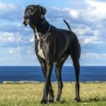 10 Popular Dog Breeds And Why They Were Bred
