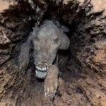 10 Amazing Mummified Animals We Have Found