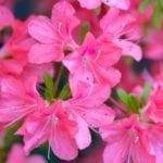10 Beautiful But Toxic Flowers
