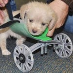 Top 10 Unusually Strange Stories About Puppies