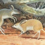 10 Remains Of Extinct Species With Rare New Insights