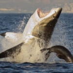 10 Great White Sharks That Came In A Bad Second