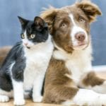 10 Human Mental Disorders That Affect Pets Too