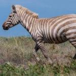 Top 10 Rare Quirks Found In Nature