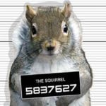 Police Arrest Squirrel, Just One Of 10 Crazy Squirrel Facts And Tales