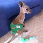 10 Great Things We Saw During The Australian Fire Crisis