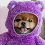 Top 10 Richest Dogs On Social Media