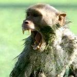 Top 10 Times A Monkey Took A Human Life
