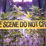 Top 10 Macabre Marijuana Murders