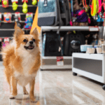 10 Best Inventions For Dog Owners
