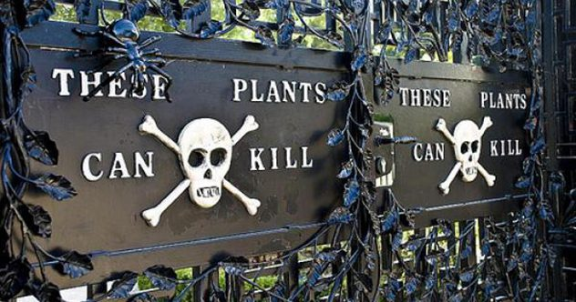 10 Examples Of Chemical Warfare In An Ordinary Garden
